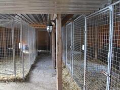 Täällä on mukavaa. Koirillekin 5 tilavaa sisätarhaa, joista neljästä on vapaa pääsy ulkotarhoihin.