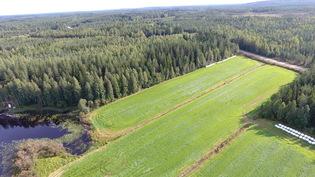 Tuottavaa peltoa