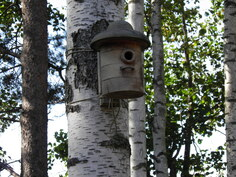 Nauti luonnosta tiaisen naapurissa