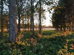 näkymää tontin laidalta puistometsään ja pelloille