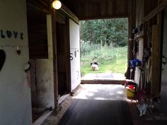 Hevostalli 2 karsinaa, varustehuone ja heinille säilytystila