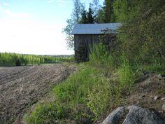 Kulmuntin peltopalstan pohjoisreuna, jossa vanha lato
