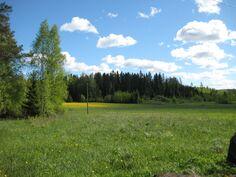 Marjamäen metsäpalsta peltoaukean takana