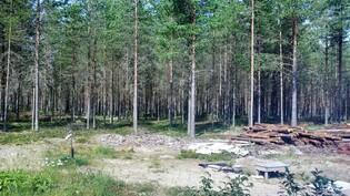 Metsikköä