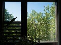 Keittiön ikkunasta näkyy kauniisti kukkiva omenapuu.