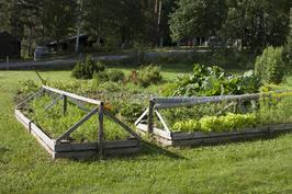 Kasvimaa. Perunaa, porkkanaa, sipulia, mansikkaa, salaattia, kukkia...