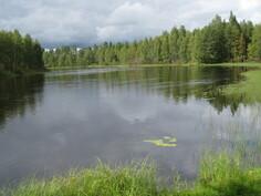 Virtaava Kiiminkijoki Perjakankosken alajuoksulla