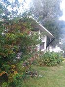 Piharakennuksen lähellä kasvaa omena- ja luumupuita sekä koristepensaita.