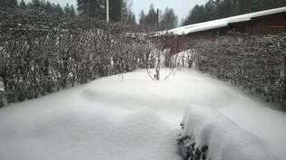 Piha talvella (2015-2016)