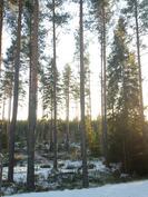 Näkymät metsään