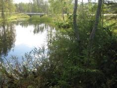 Tonttiin rajoittuva joki