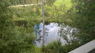 Näkymää joelle