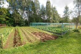Kasvimaa ja mansikkamaa