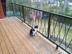 Uusittu lattia. Kissa sai uuden kodin 21.12.16