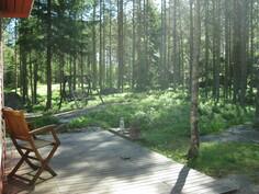 näkymä terassilta metsään