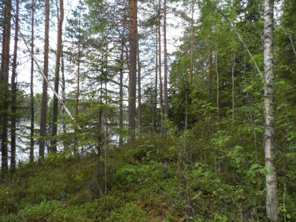 Helvetinjärven Kansallispuisto Reitit