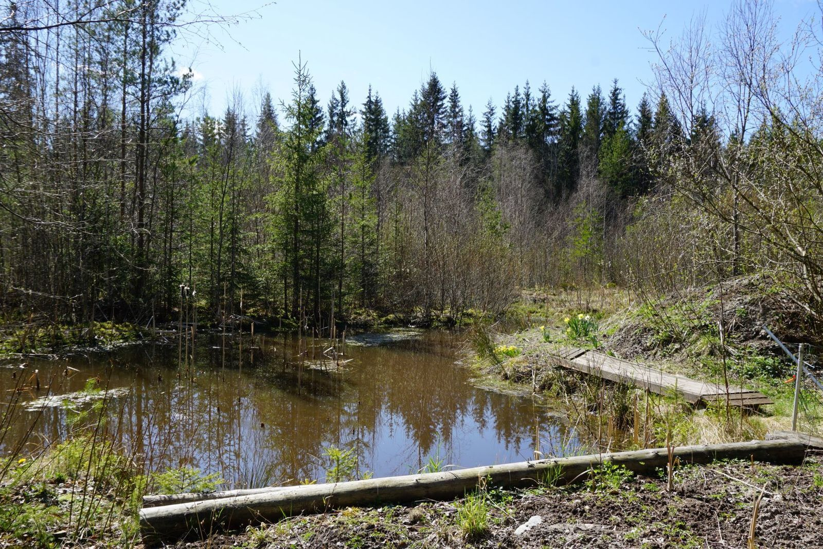Piha-alueella on pieni vesialue