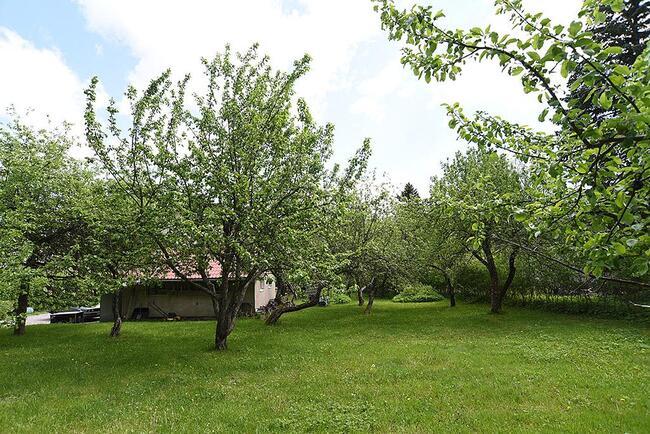 omenapuut kukassa