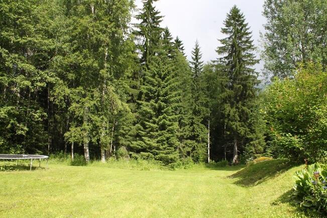 Piha rajautuu metsään