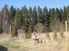 Näkymä pihalta metsään