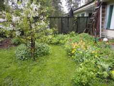 kukkia ja kirsikkapuu yms. viherpeukun unelma piha