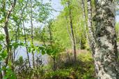 Myynti Kiviapaja, Suuri Siikajärvi (3/ 3) Kortteli 3, tontti 3
