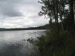 Myynti Kangasniemi, Syväjärvi, Metsälauha