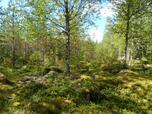 Myynti Poikelisjärvi (1/ 4) kortteli 1, tontti 4