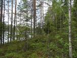 Myynti Poikelisjärvi (2/ 1) kortteli 2, tontti 1