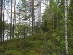 Myynti Poikelisjärvi (4/ 1) kortteli 4, tontti 1