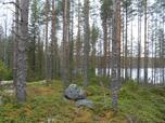 Myynti Iso-Mustajärvi, eteläosa (8) Tontti 8, Aureenlahdentie