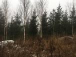 Myynti Mattilan metsätie (ei virallinen)