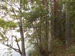Myynti Laasalantie Pahkajärvi