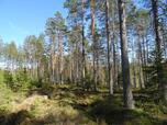 Myynti Isojärvi (10) Tontti 10