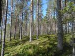 Myynti Isojärvi (8) Tontti 8