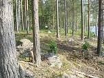 Myynti Vuokalanjärvi Ilves 6 -tila