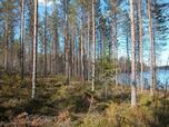 Myynti Pylkönmäki (33) Tontti 33