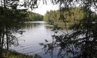 Myynti Niinijärventie