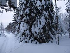 kuva kuviolta 50 metsäpalstan itäpäästä