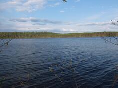 Kesäistä kuvaa rannasta Jukojärvelle. Sovi oma esittely puh. 050 594 5260/Elina