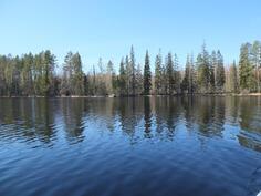 Tontin rantaviivaa järveltä päin