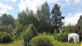Puutarha kesällä