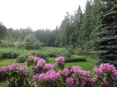 Vehreää omaa 2350 m2 puutarhatonttia komistaa myös hopeakuusi sekä ...