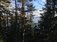 Puustoa vähentämällä paikasta aukeaa kaunis näköala Gästfjärdenille