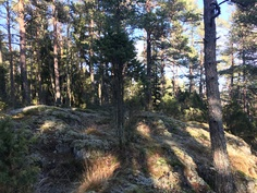 Kallioinen maaperä / Bergig markgrund