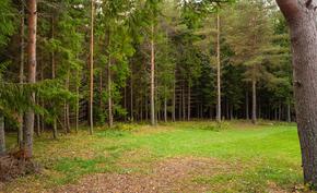 Metsäinen tonttiosuus