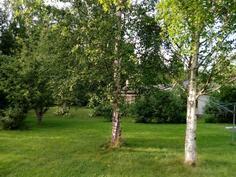 Takapihan puita
