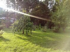 Takapiha ilta-auringossa