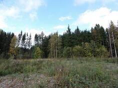 Tontti sijaitsee metsän läheisyydessä