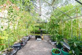 Kasvihuone / Växthus